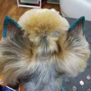 Собака с блестками на ушах