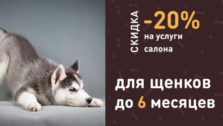 -20% на услуги салона для щенков до 6 месяцев