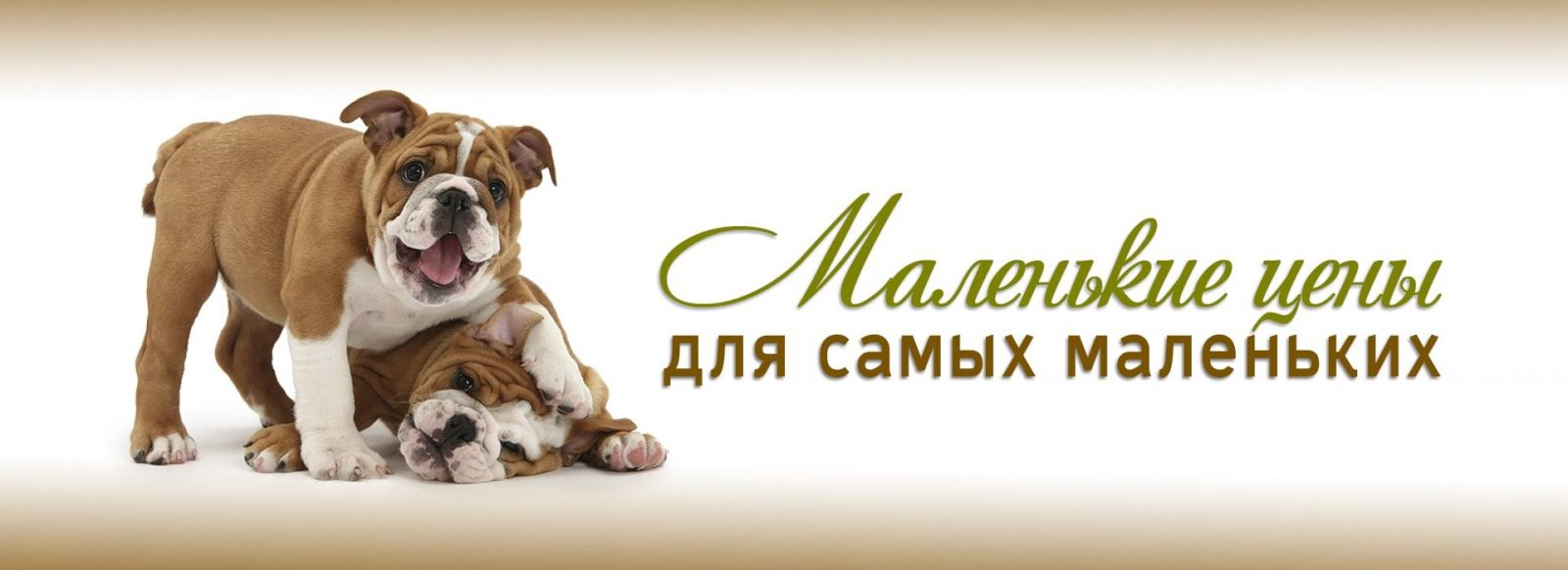 Груминг для маленьких пород собак