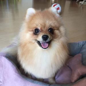 Собака после стрижки на дому