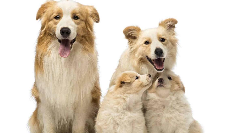 Легкие решения сложных проблем по уходу за собакой