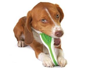 Зубная щетка для собаки