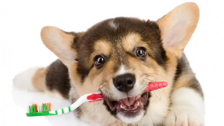 Нужно ли чистить зубы собаке
