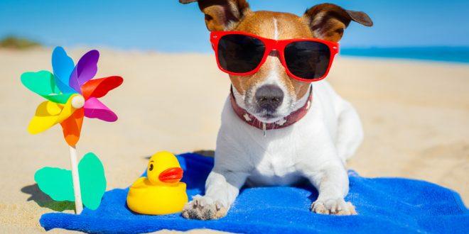 Нужно ли стричь собаку на лето