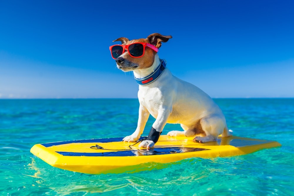 Собака купается