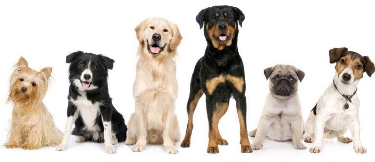 Что расскажет о вас порода собаки