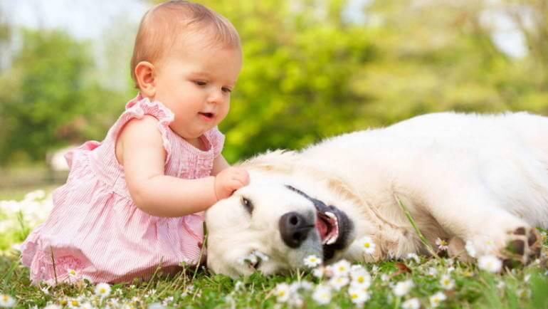 ТОП 9 собак для детей