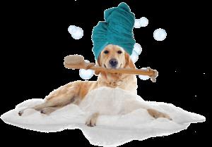 Спа-процедуры для собак
