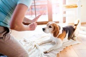 Дрессировка собаки в домашних условиях