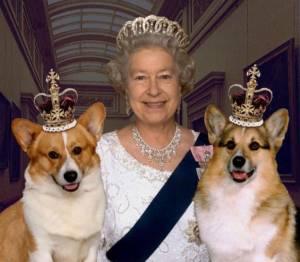 Собаки Британской семьи