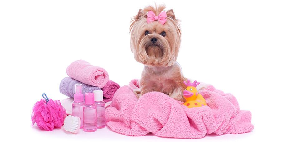Зачем нужны спа процедуры для собак. Виды массажа для собак.