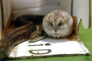 Дружба мыши и змеи