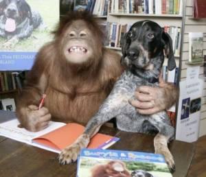Дружба обезьяны и собаки