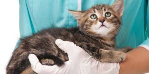 Прививки котятам