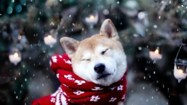 Уход за собакой зимой
