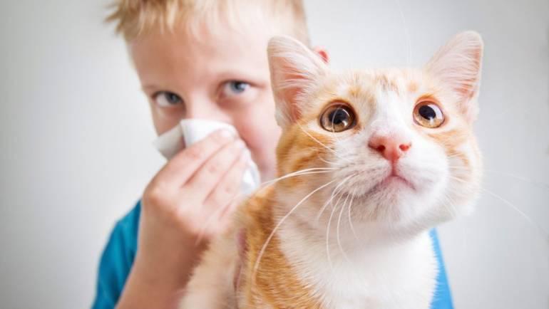 Какое животное завести аллергику