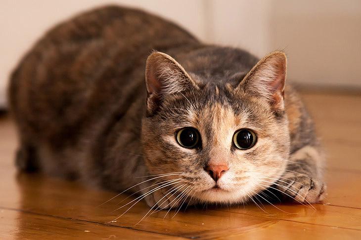 Красивые имена для кошек и котов
