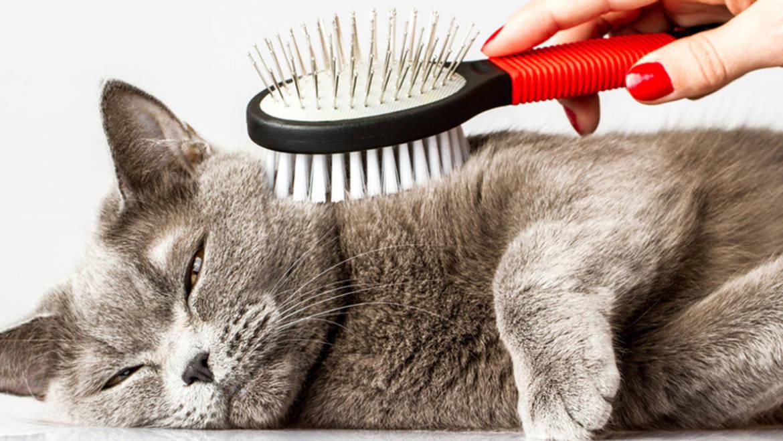 Как ухаживать за котами зимой
