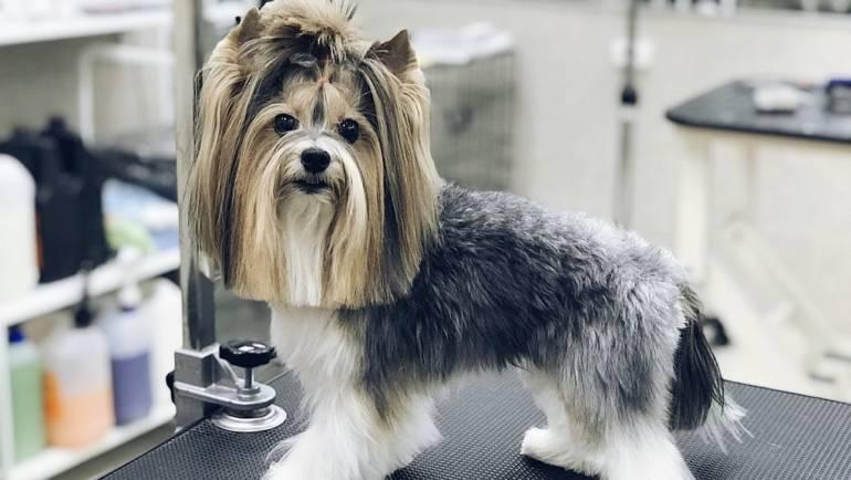 Каким породам собак нужен груминг