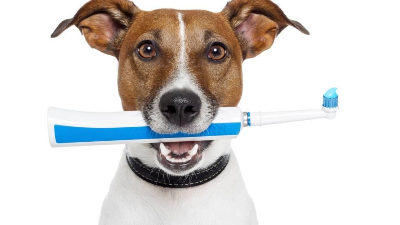 Уход за зубами домашних питомцев