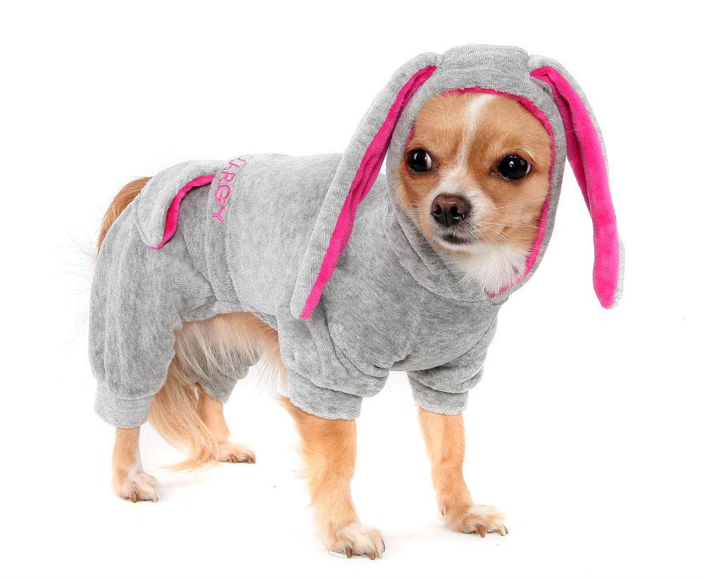 Как правильно выбрать одежду для собак