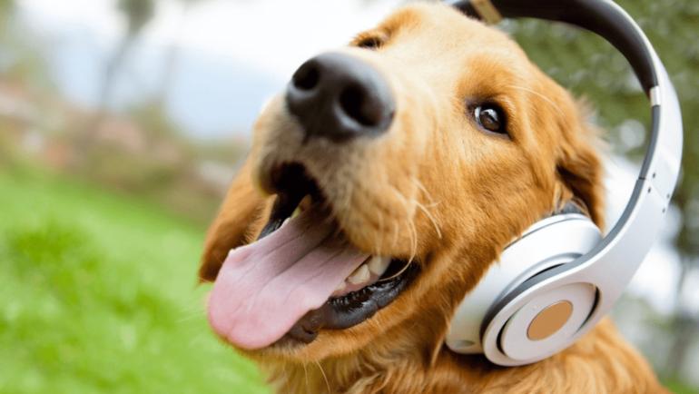 Какие звуки любят и не любят собаки