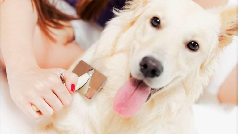 Какие щетки использовать, когда ваша собака линяет