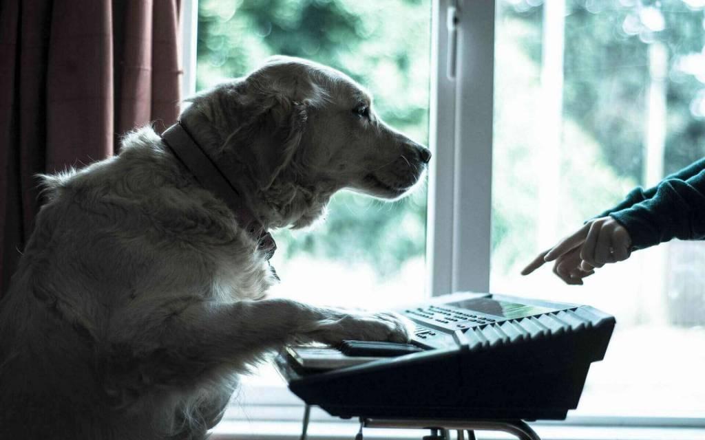 Звуки которые любят собаки
