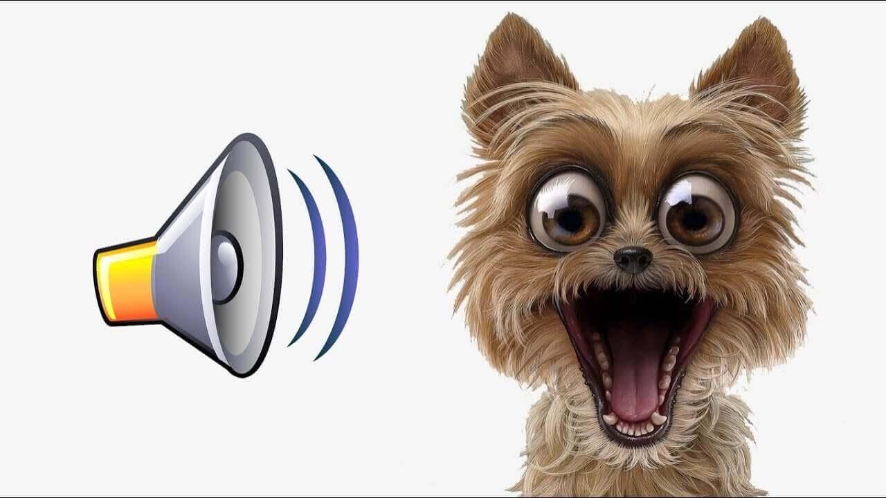 Звуки которые не нравятся собакам
