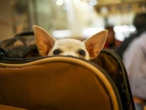 с собакой в самолете