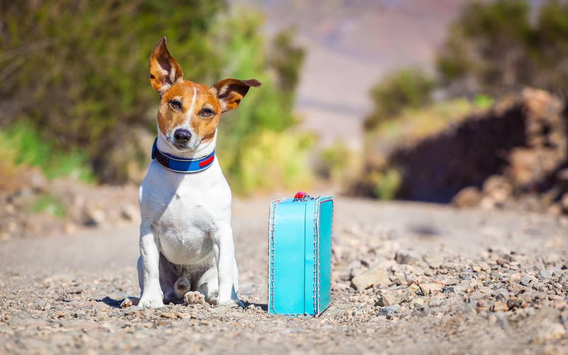 Как путешествовать с собакой в самолете