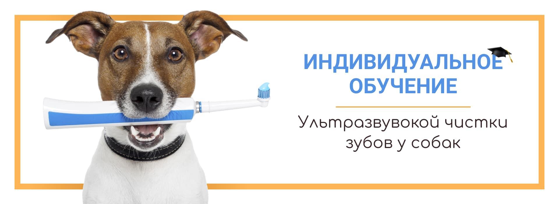 Обучение чистке зубов собаке