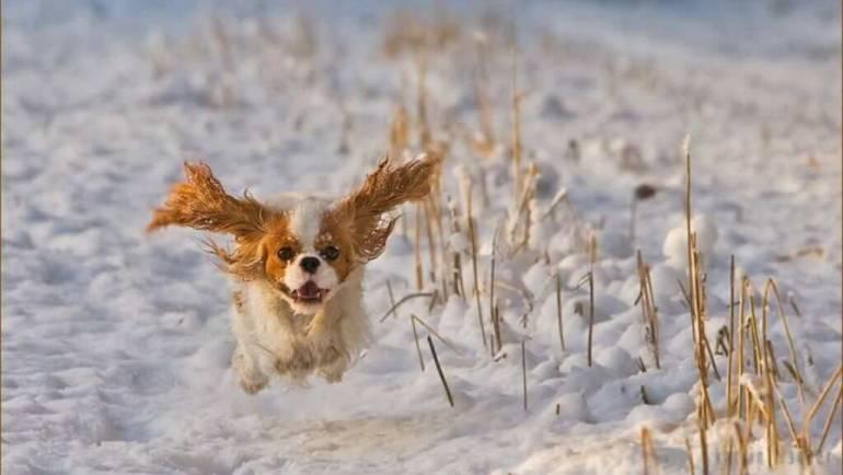 Нужно ли стричь собаку зимой?