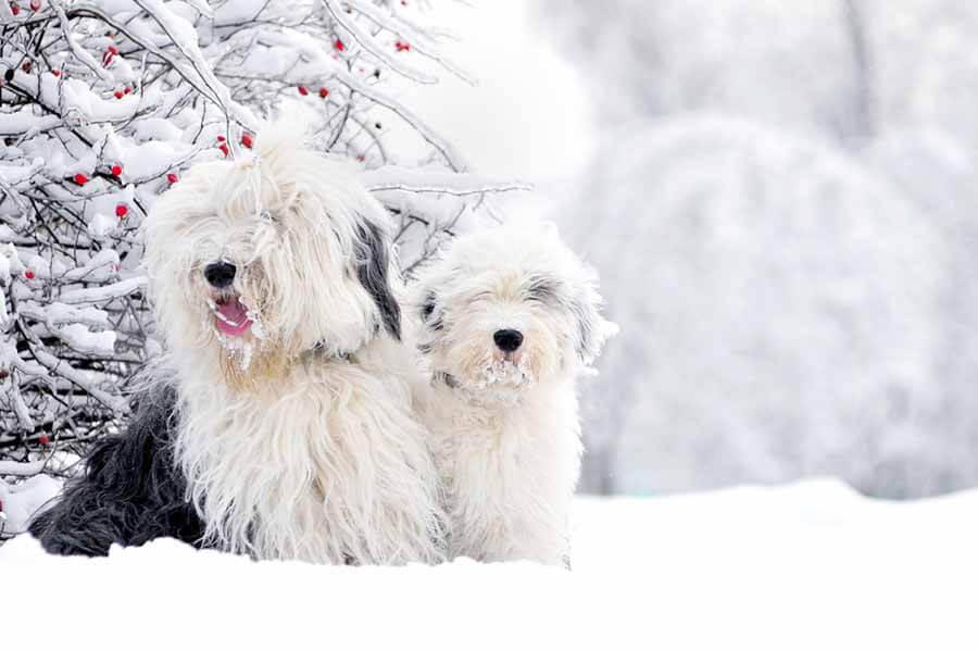 Зимняя стрижка собак