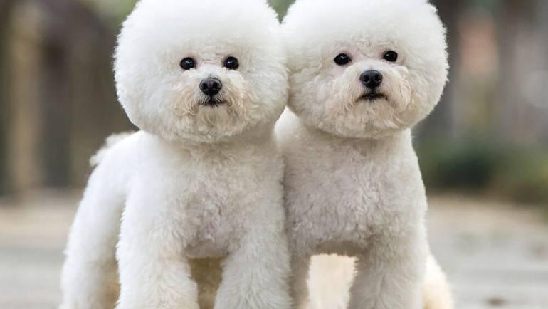 Виды стрижек собак