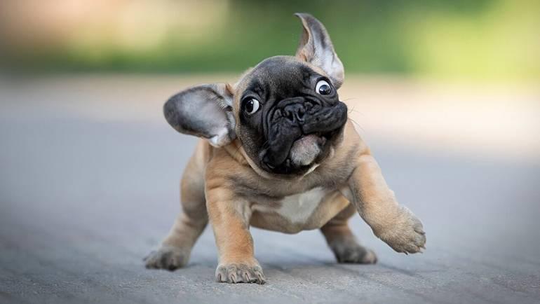 Как приучить щенка к грумингу