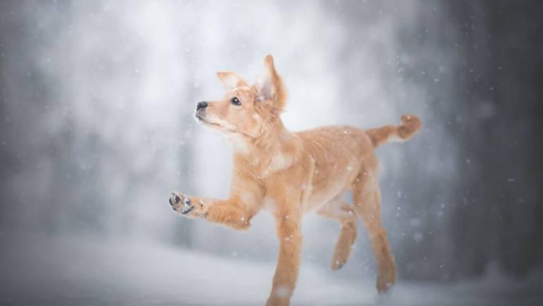 Как защитить лапы собаки от реагентов и соли зимой