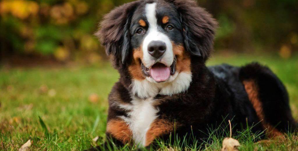 Крупные породы собак для детей
