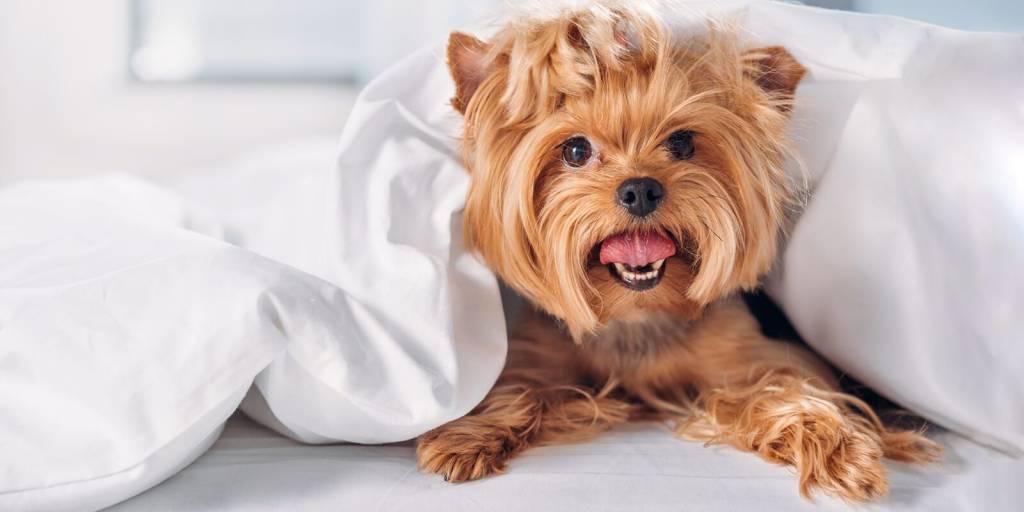 Породы небольших собак для детей