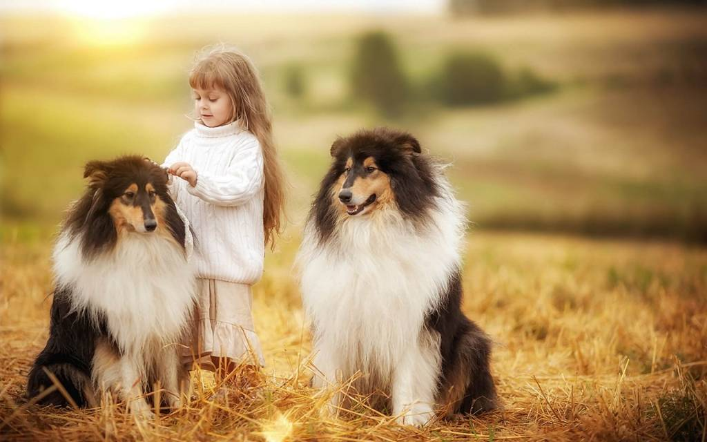 Средние породы собак для детей