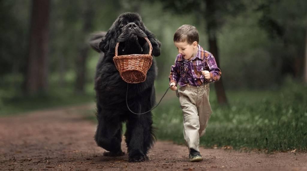 Породы собак для дома и детей
