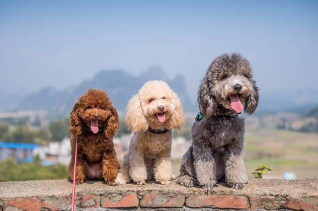 Лучшая порода собак для детей и квартиры