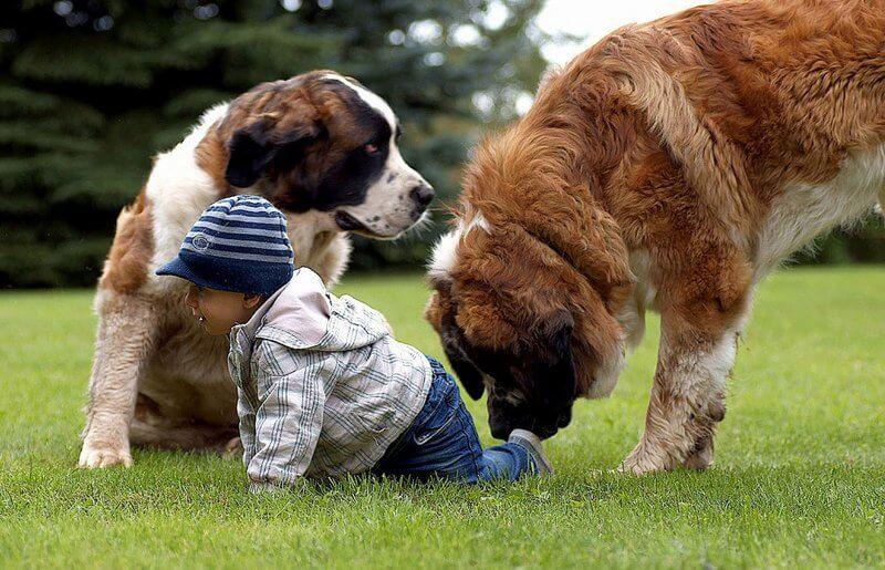 Большие породы собак для детей