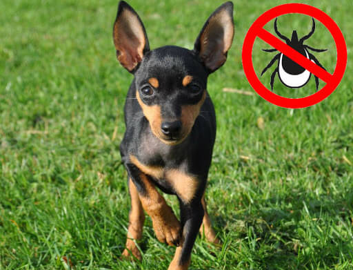 Таблетки для собаки от клещей