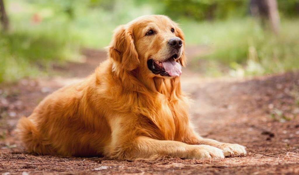 Лучшая порода собак для детей