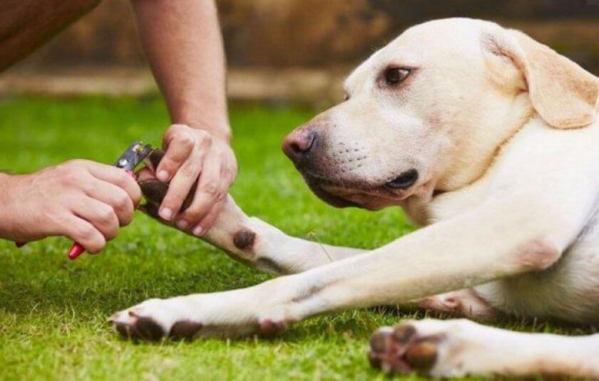 Как обрезать когти собакам