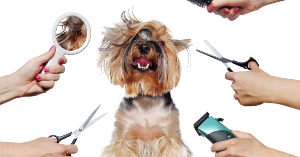 Груминг собак в домашних условиях
