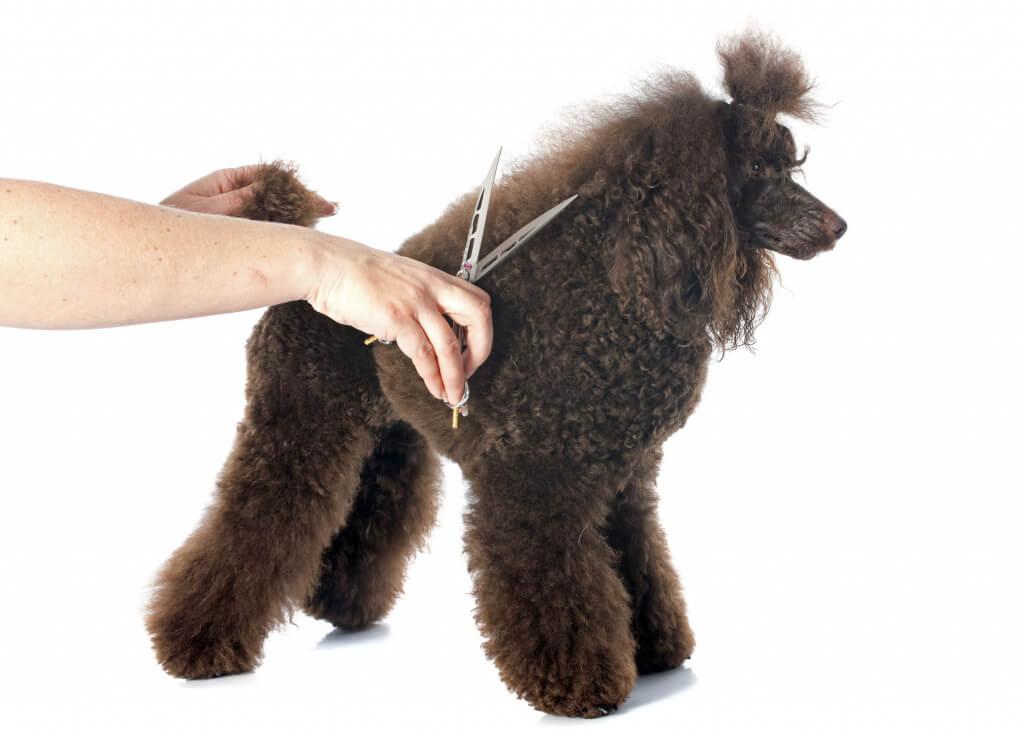 Основные правила стрижки собак