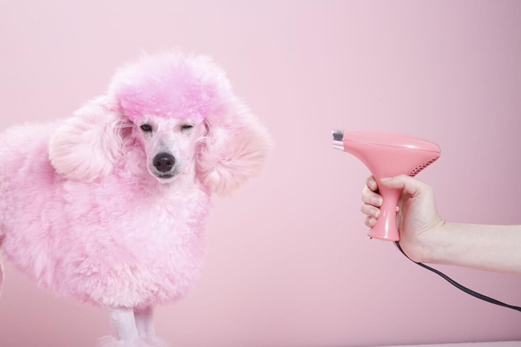 Основы домашнего груминга собак